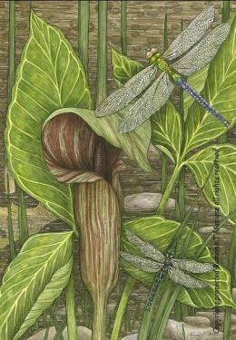 """Jack in the Pulpit & Dragonflies,"" by Ramona Maziarz"